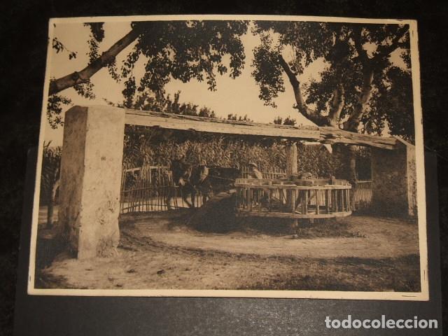 ORIHUELA ALICANTE UNA NORIA OTTO WUNDERLICH FOTOGRAFO DECADA 1920 (Fotografía Antigua - Gelatinobromuro)