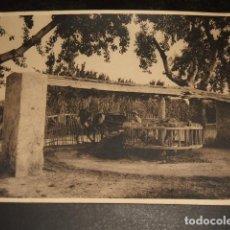 Fotografía antigua: ORIHUELA ALICANTE UNA NORIA OTTO WUNDERLICH FOTOGRAFO DECADA 1920. Lote 81559804