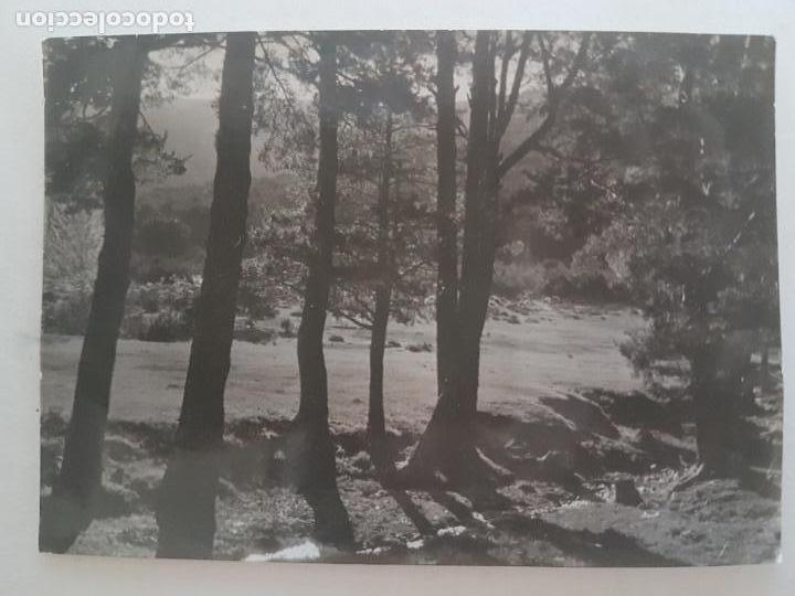 LINDE PINOS CERCEDILLA MADRID TOMADA POR INGENIEROS FORESTEALES FOTOGRAFIA AÑOS 50 (Fotografía Antigua - Gelatinobromuro)