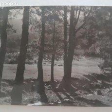 Fotografía antigua: LINDE PINOS CERCEDILLA MADRID TOMADA POR INGENIEROS FORESTEALES FOTOGRAFIA AÑOS 50. Lote 135621742