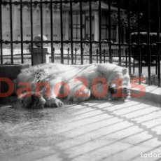 Fotografía antigua: CASA DE FIERAS DEL PARQUE DEL RETIRO 1925 MADRID - FOTOGRAFIA ANTIGUA - NEGATIVO DE CRISTAL. Lote 135756310