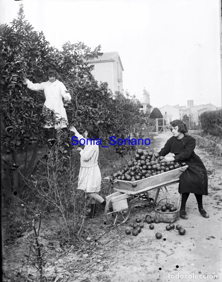 RECOLECTA DE NARANJAS - ALREDEDORES LUXENTE, FONTANARS AFORINS. CRISTAL NEGATIVO - C.1900 (Fotografía Antigua - Gelatinobromuro)
