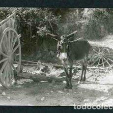 Fotografía antigua: CATALUNYA. BURRITO Y CARRO. C. 1965. Lote 155983682