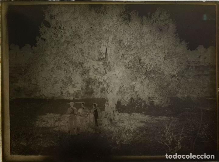 Fotografía antigua: COLECCIÓN DE 186 FOTOGRAFÍAS EN PLACAS DE CRISTAL. CAJAS ORIGINALES. SIGLO XX. - Foto 3 - 184506442