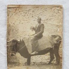 Fotografía antigua: ANTIGUA Y RARA FOTO COSTUMBRISTA CAMPESINO SUBIDO A UN BUEY. Lote 186240895