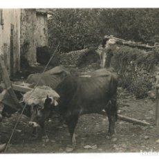 Fotografia antiga: ASTÚRIAS - CARAVIA, FOTO 11X17,5 CM.. Lote 224920962