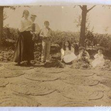 Fotografía antigua: GRUPO DE JÓVENES POSANDO JUNTO A UVAS PARA PEDRO XIMENEZ. 1910 H.. Lote 222448703