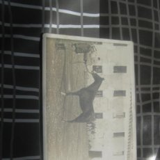 Fotografía antigua: TARJETA POSTAL MILITAR CON CABALLO DE CARRERAS. Lote 31735039