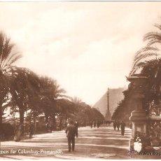 Fotografía antigua: BARCELONA PALMERAS DEL PASEO DE COLÓN. Lote 10051057