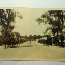 Fotografía antigua: ANTIGUA POSTAL FOTOGRAFICA - MEXICO DF CHAPULTEPEC. CALZADA DE LAS PALMAS. SIN CIRCULAR. AÑOS 20. Lote 89673092