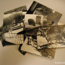Fotografía antigua: FOTO FOTOGRAFIA ZOO CAMELLO CIERVOS HIPOPOTAMOS DELFINES..... LOTE DE 20 FOTOS (17). Lote 94080925
