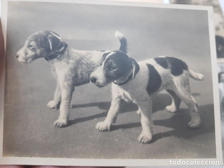 Fotografía antigua: Fotografía tarjeta postal lote 6 algunas selladas años 20-30 - Foto 2 - 175459689