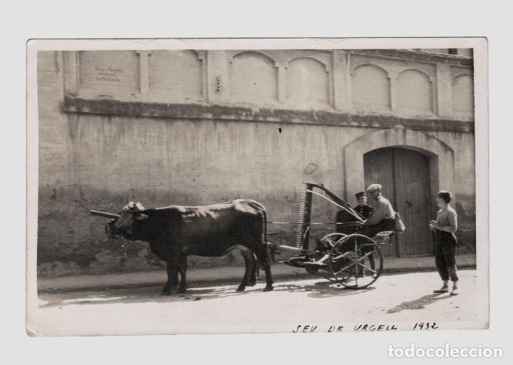 SEU D'URGELL - AÑO 1932. CARRO CON BUEY (Fotografía Antigua - Tarjeta Postal)