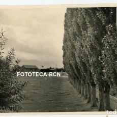Fotografía antigua: FOTO ORIGINAL VISTA DEL PLA DE LA SEU D'URGELL ARBOLEDA CARRETERA A PUIGCERDA AÑOS 40. Lote 245005075