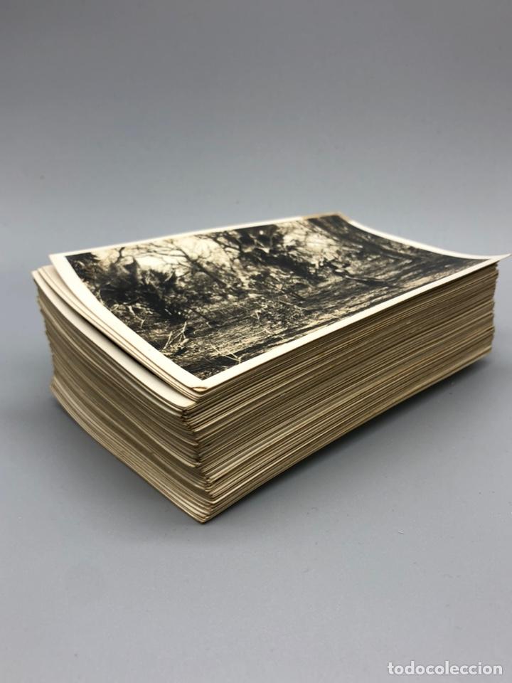 Fotografía antigua: Lote de 108 antiguas fotografías Africa cazadores de animales africanos ,elefantes,marfil... - Foto 2 - 247280240