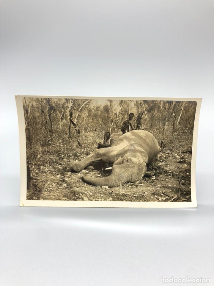 Fotografía antigua: Lote de 108 antiguas fotografías Africa cazadores de animales africanos ,elefantes,marfil... - Foto 5 - 247280240