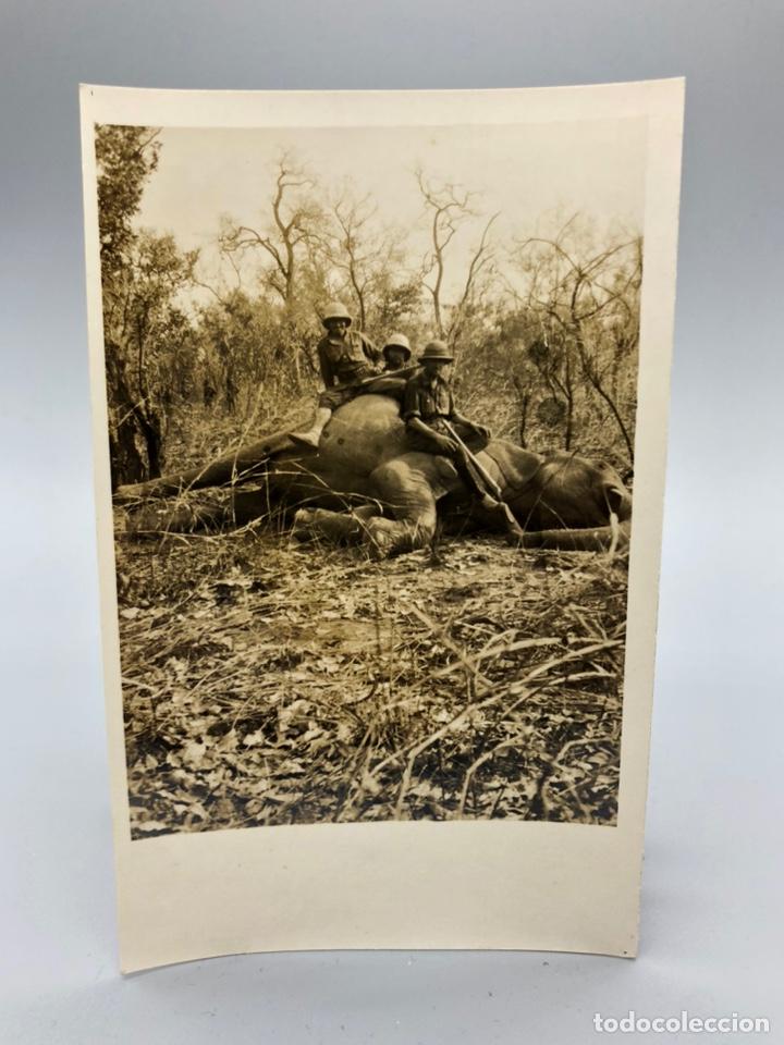Fotografía antigua: Lote de 108 antiguas fotografías Africa cazadores de animales africanos ,elefantes,marfil... - Foto 6 - 247280240