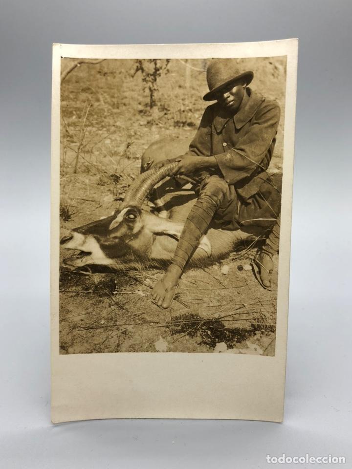 Fotografía antigua: Lote de 108 antiguas fotografías Africa cazadores de animales africanos ,elefantes,marfil... - Foto 7 - 247280240