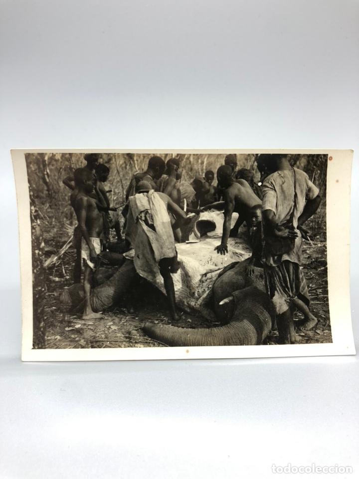 Fotografía antigua: Lote de 108 antiguas fotografías Africa cazadores de animales africanos ,elefantes,marfil... - Foto 8 - 247280240