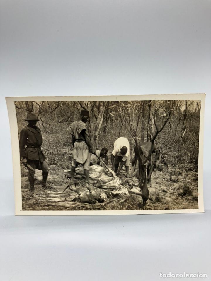 Fotografía antigua: Lote de 108 antiguas fotografías Africa cazadores de animales africanos ,elefantes,marfil... - Foto 13 - 247280240