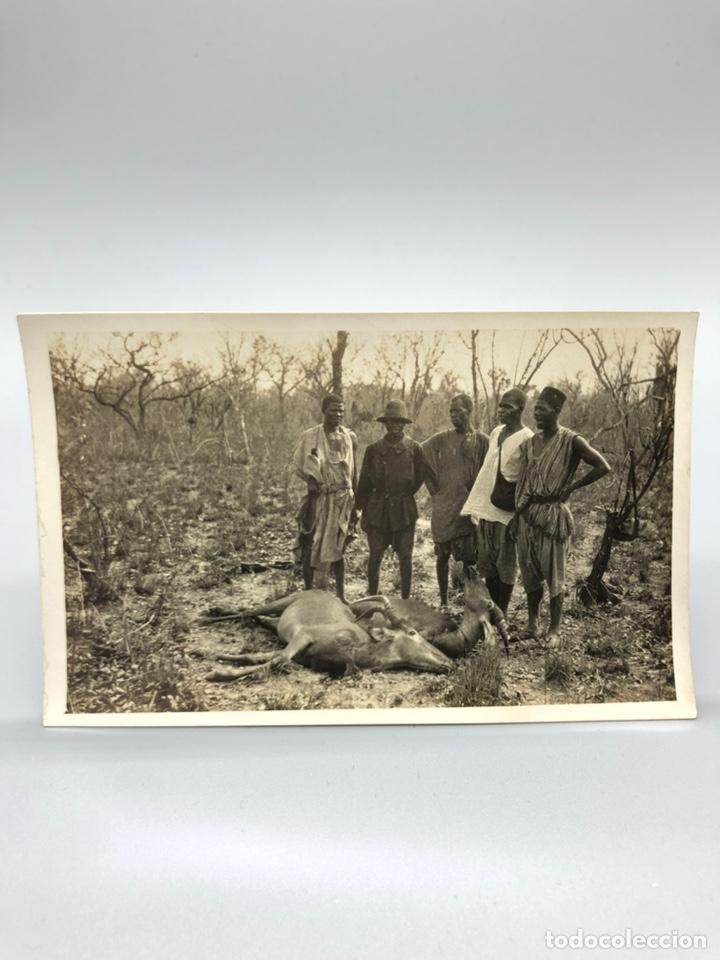 Fotografía antigua: Lote de 108 antiguas fotografías Africa cazadores de animales africanos ,elefantes,marfil... - Foto 15 - 247280240
