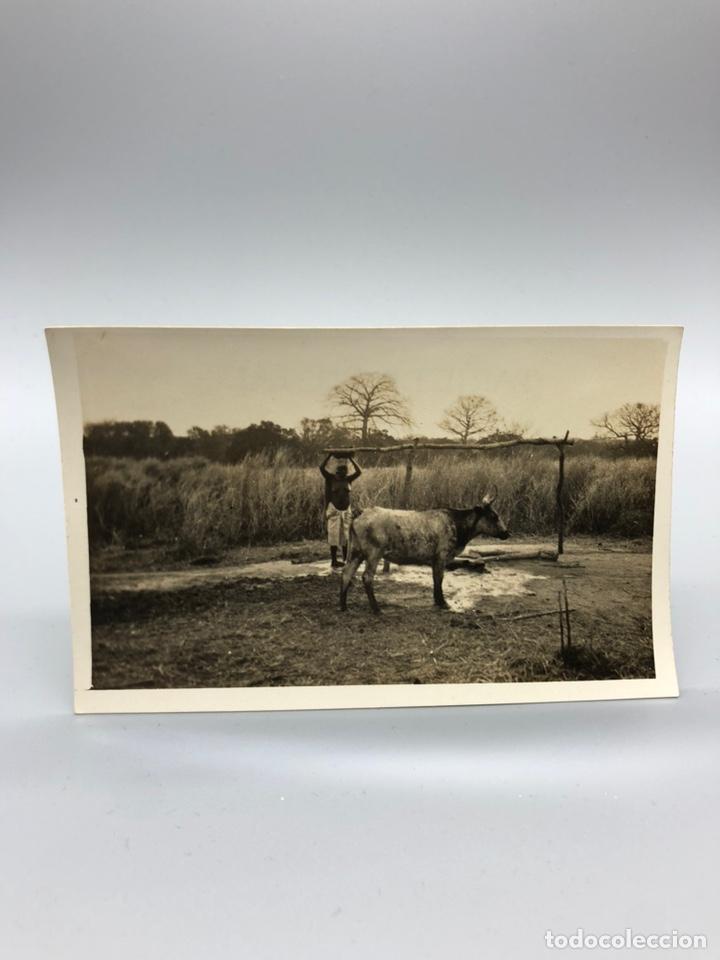 Fotografía antigua: Lote de 108 antiguas fotografías Africa cazadores de animales africanos ,elefantes,marfil... - Foto 18 - 247280240