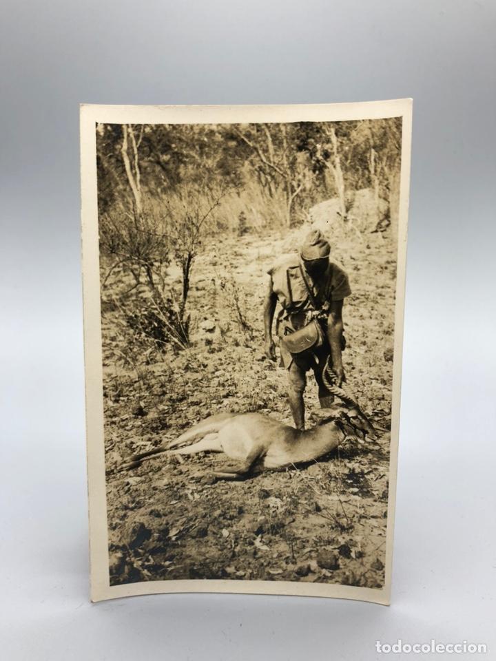 Fotografía antigua: Lote de 108 antiguas fotografías Africa cazadores de animales africanos ,elefantes,marfil... - Foto 21 - 247280240