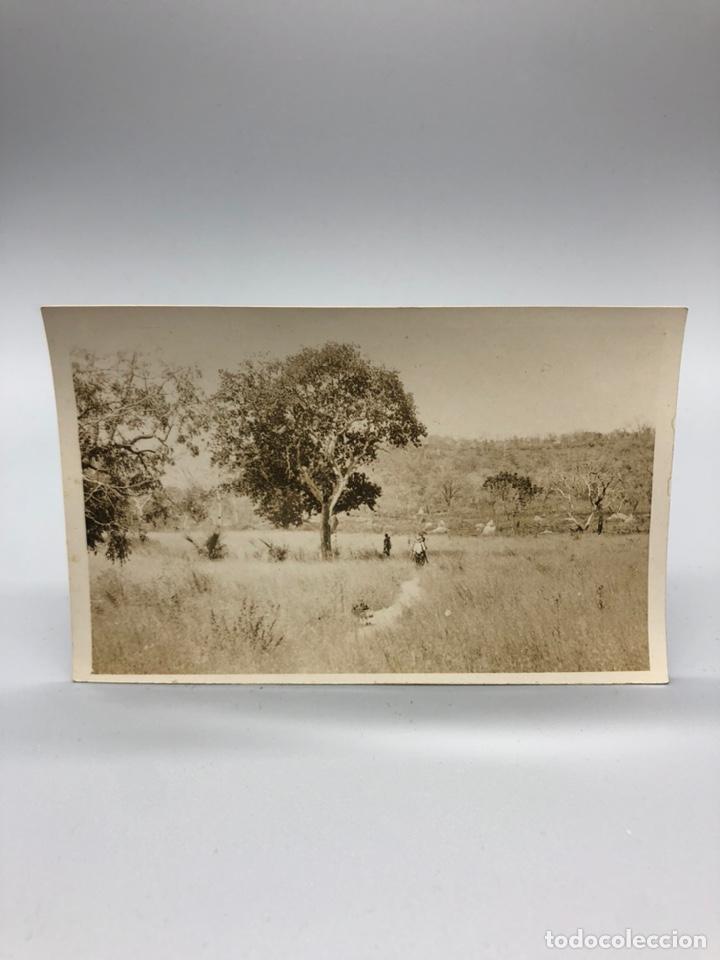 Fotografía antigua: Lote de 108 antiguas fotografías Africa cazadores de animales africanos ,elefantes,marfil... - Foto 23 - 247280240