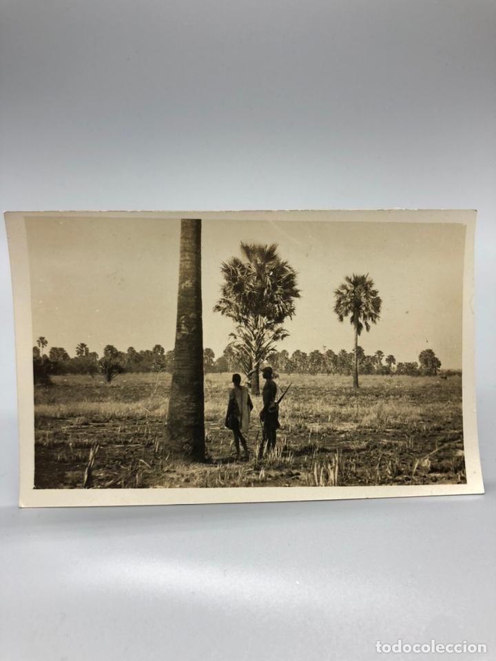 Fotografía antigua: Lote de 108 antiguas fotografías Africa cazadores de animales africanos ,elefantes,marfil... - Foto 26 - 247280240
