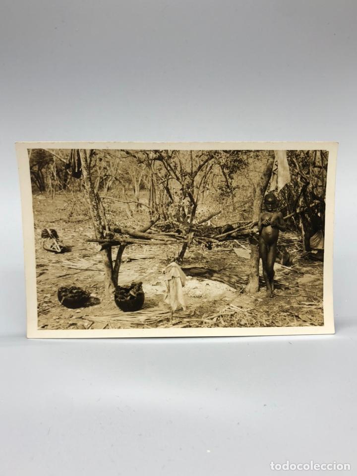 Fotografía antigua: Lote de 108 antiguas fotografías Africa cazadores de animales africanos ,elefantes,marfil... - Foto 28 - 247280240