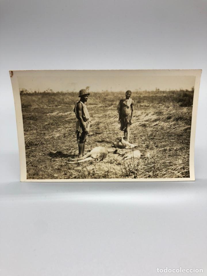 Fotografía antigua: Lote de 108 antiguas fotografías Africa cazadores de animales africanos ,elefantes,marfil... - Foto 31 - 247280240