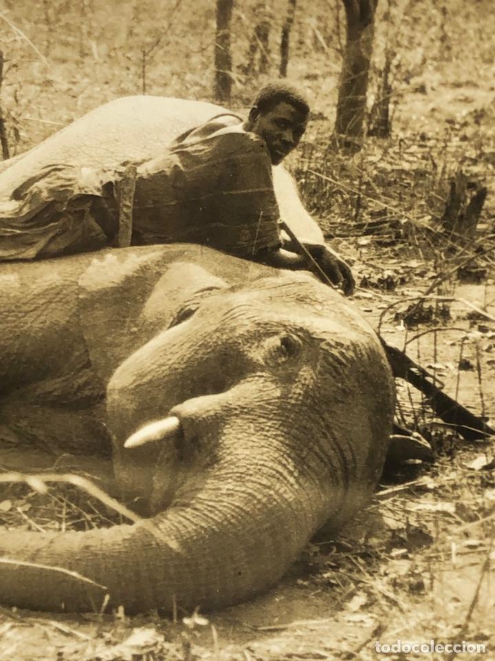 LOTE DE 108 ANTIGUAS FOTOGRAFÍAS AFRICA CAZADORES DE ANIMALES AFRICANOS ,ELEFANTES,MARFIL... (Fotografía Antigua - Tarjeta Postal)