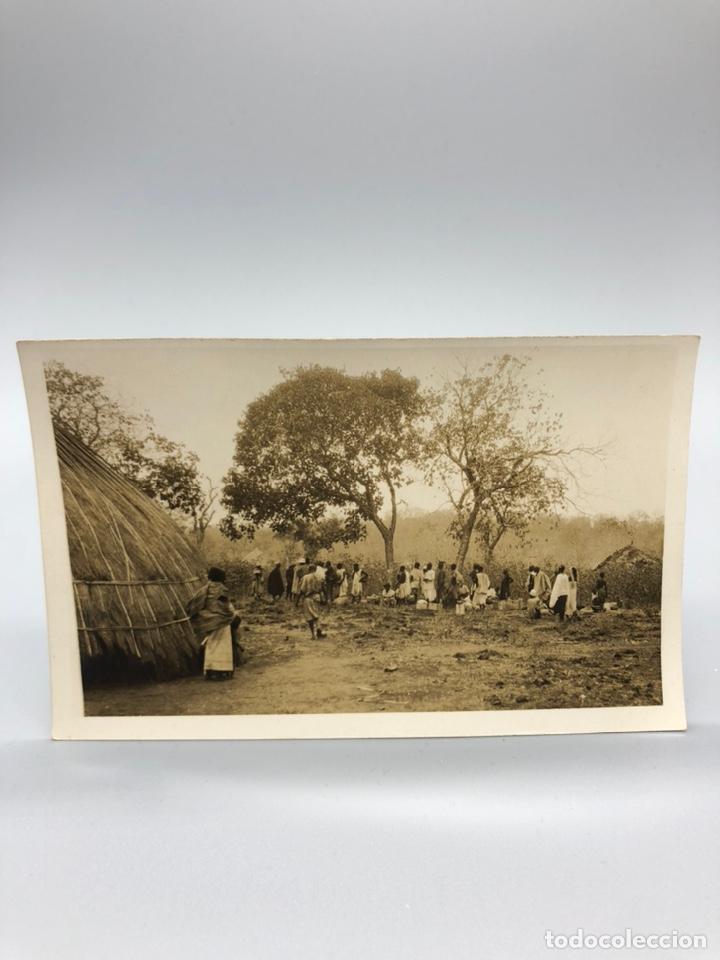 Fotografía antigua: Lote de 108 antiguas fotografías Africa cazadores de animales africanos ,elefantes,marfil... - Foto 34 - 247280240