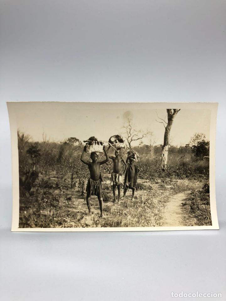 Fotografía antigua: Lote de 108 antiguas fotografías Africa cazadores de animales africanos ,elefantes,marfil... - Foto 35 - 247280240