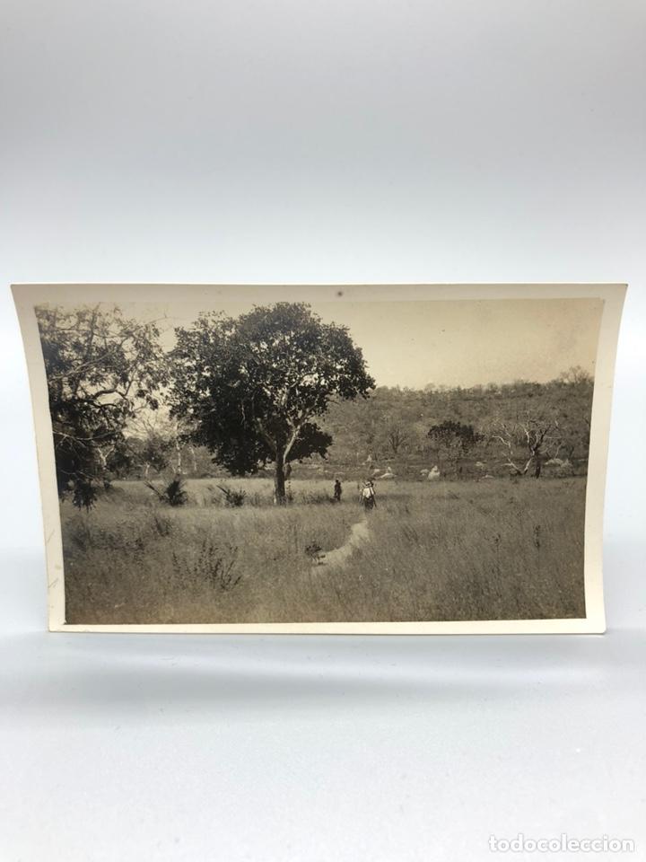 Fotografía antigua: Lote de 108 antiguas fotografías Africa cazadores de animales africanos ,elefantes,marfil... - Foto 41 - 247280240