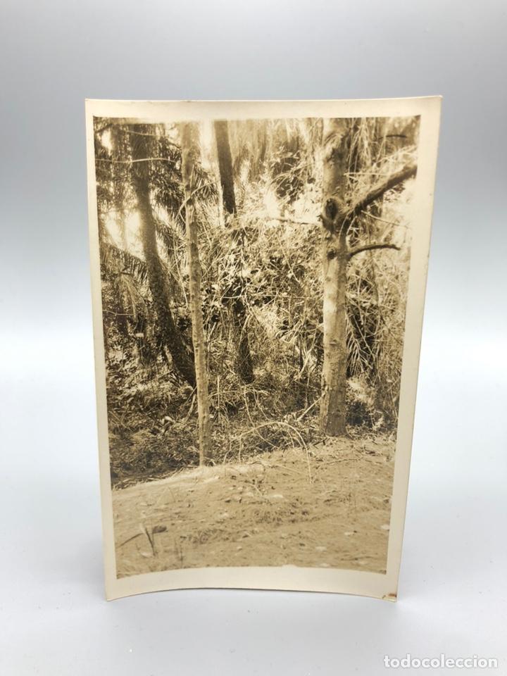 Fotografía antigua: Lote de 108 antiguas fotografías Africa cazadores de animales africanos ,elefantes,marfil... - Foto 44 - 247280240