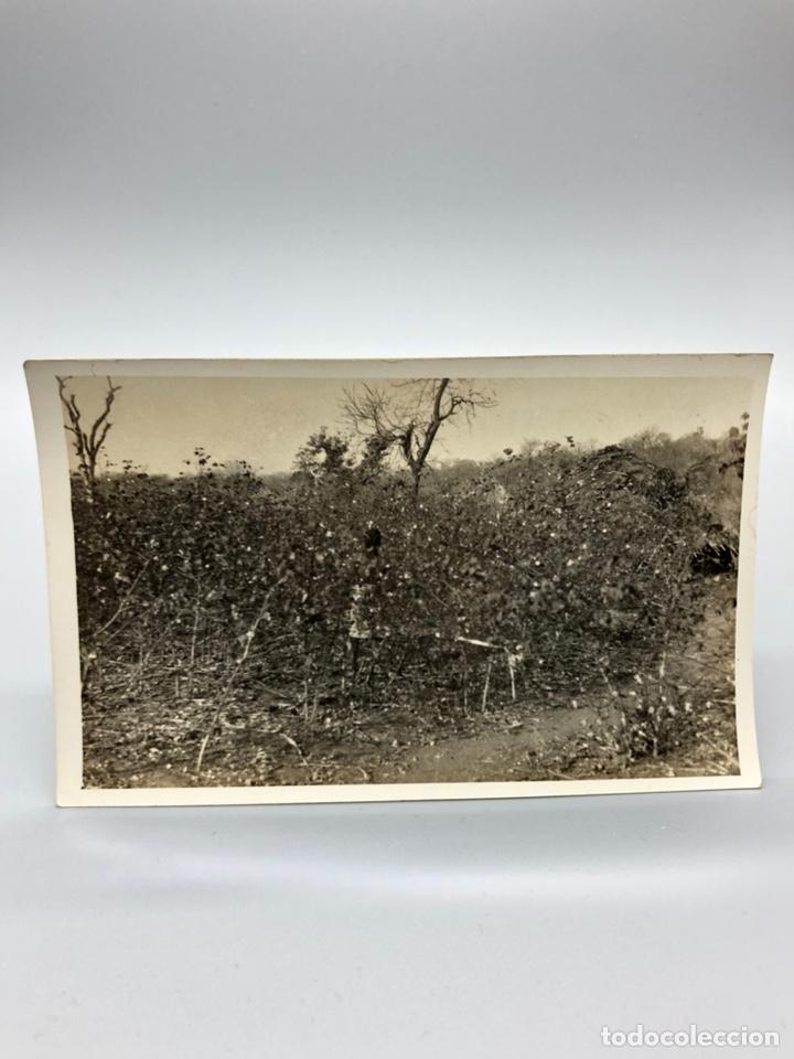 Fotografía antigua: Lote de 108 antiguas fotografías Africa cazadores de animales africanos ,elefantes,marfil... - Foto 46 - 247280240