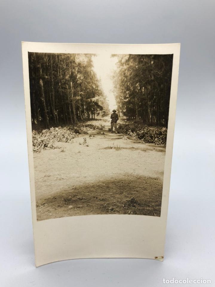 Fotografía antigua: Lote de 108 antiguas fotografías Africa cazadores de animales africanos ,elefantes,marfil... - Foto 47 - 247280240