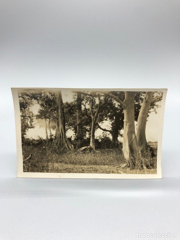 Fotografía antigua: Lote de 108 antiguas fotografías Africa cazadores de animales africanos ,elefantes,marfil... - Foto 49 - 247280240