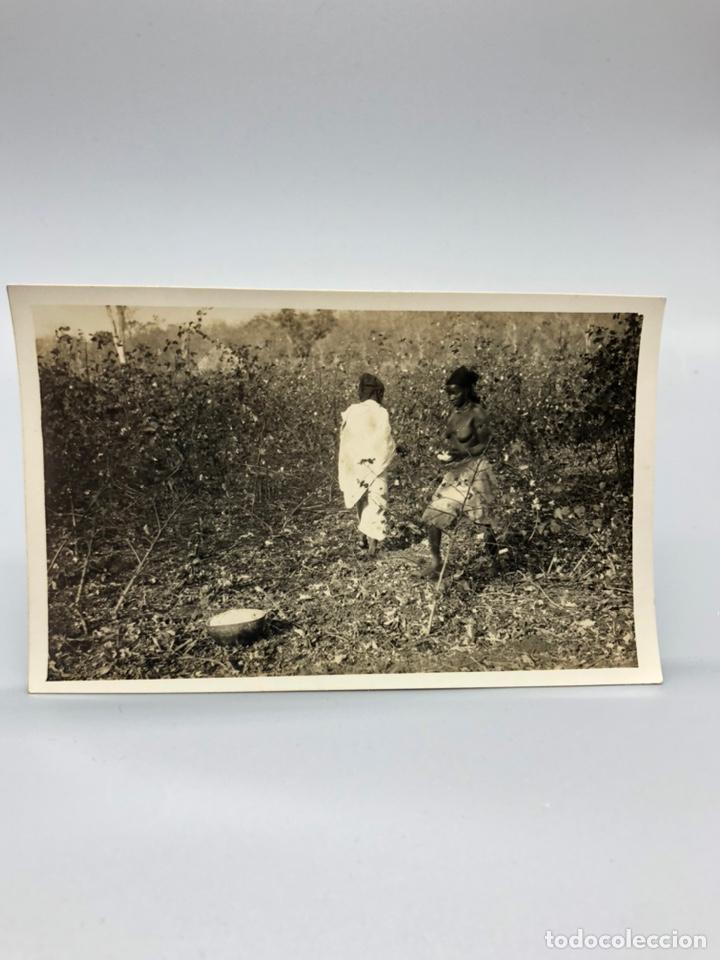 Fotografía antigua: Lote de 108 antiguas fotografías Africa cazadores de animales africanos ,elefantes,marfil... - Foto 50 - 247280240