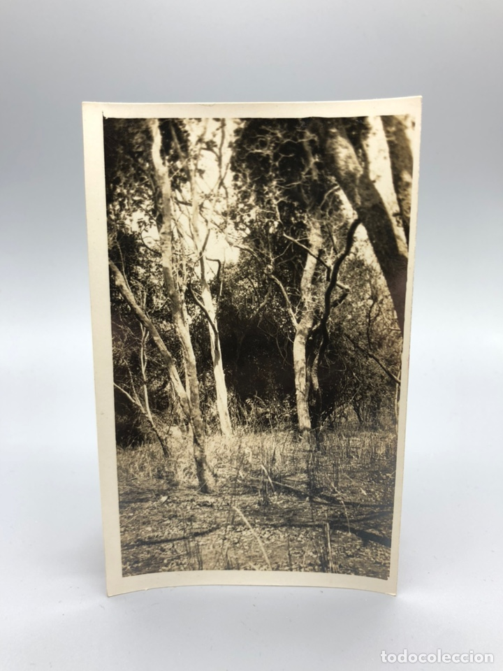 Fotografía antigua: Lote de 108 antiguas fotografías Africa cazadores de animales africanos ,elefantes,marfil... - Foto 51 - 247280240