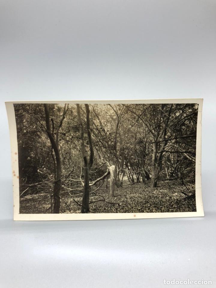 Fotografía antigua: Lote de 108 antiguas fotografías Africa cazadores de animales africanos ,elefantes,marfil... - Foto 53 - 247280240