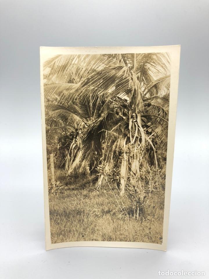 Fotografía antigua: Lote de 108 antiguas fotografías Africa cazadores de animales africanos ,elefantes,marfil... - Foto 54 - 247280240