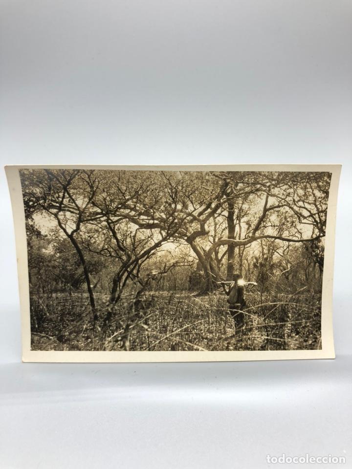 Fotografía antigua: Lote de 108 antiguas fotografías Africa cazadores de animales africanos ,elefantes,marfil... - Foto 55 - 247280240