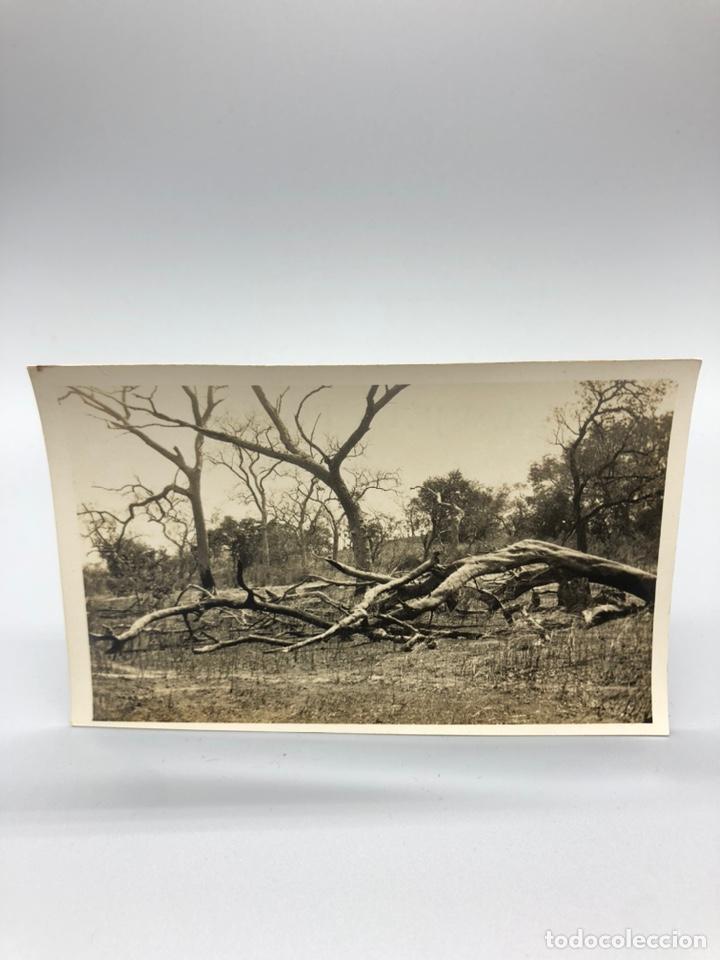 Fotografía antigua: Lote de 108 antiguas fotografías Africa cazadores de animales africanos ,elefantes,marfil... - Foto 57 - 247280240
