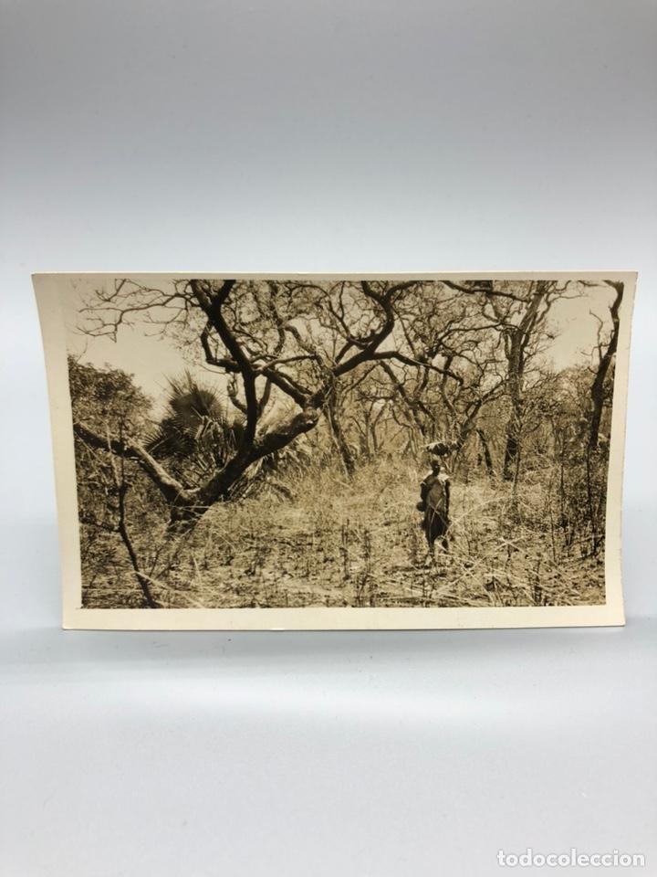 Fotografía antigua: Lote de 108 antiguas fotografías Africa cazadores de animales africanos ,elefantes,marfil... - Foto 58 - 247280240