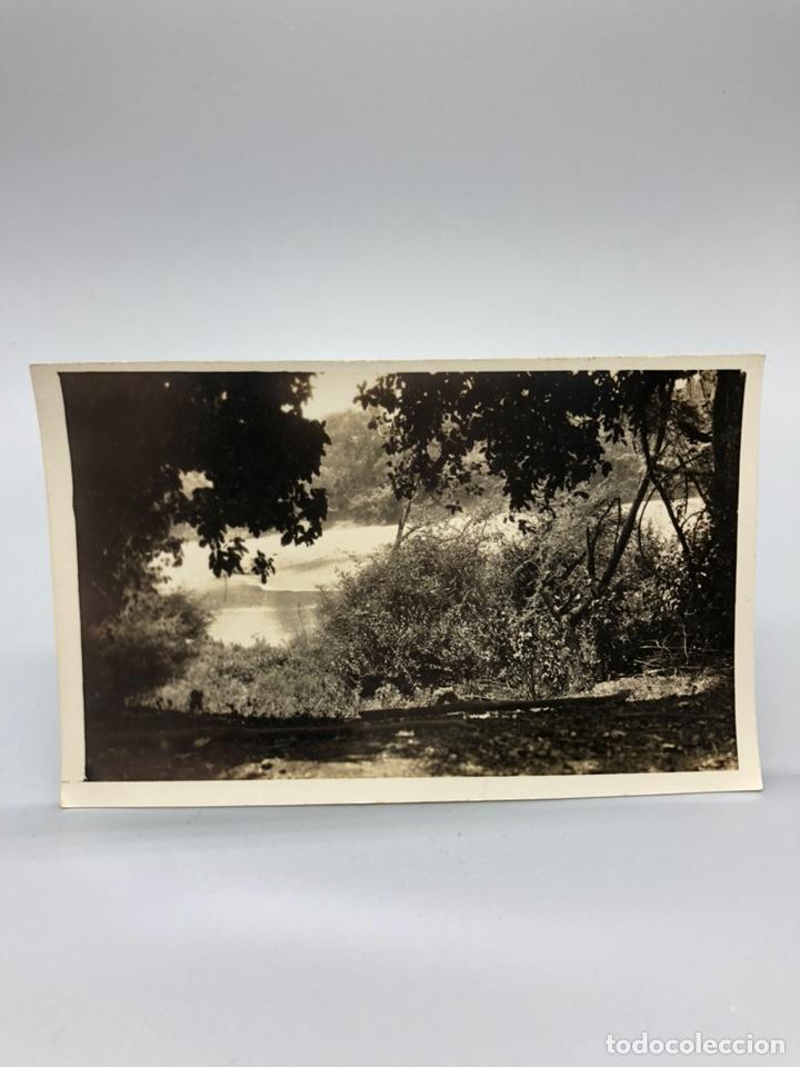 Fotografía antigua: Lote de 108 antiguas fotografías Africa cazadores de animales africanos ,elefantes,marfil... - Foto 61 - 247280240
