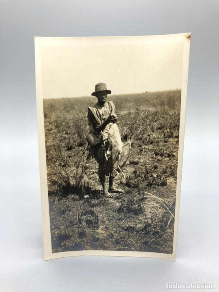 Fotografía antigua: Lote de 108 antiguas fotografías Africa cazadores de animales africanos ,elefantes,marfil... - Foto 63 - 247280240