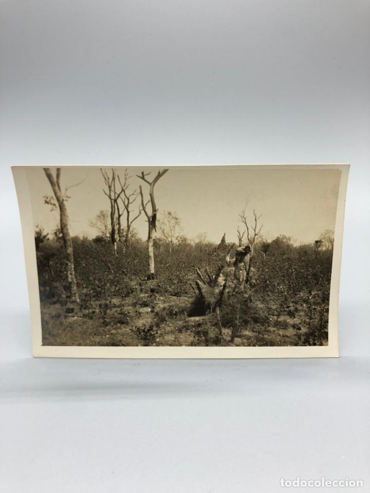 Fotografía antigua: Lote de 108 antiguas fotografías Africa cazadores de animales africanos ,elefantes,marfil... - Foto 64 - 247280240