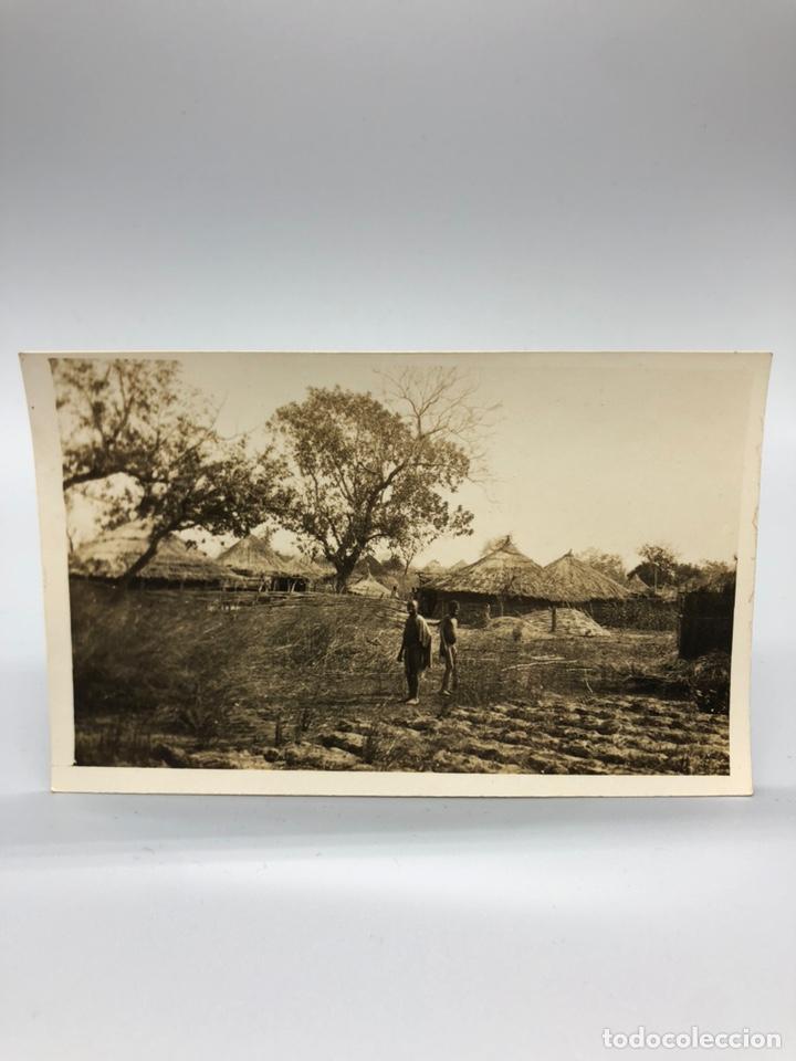Fotografía antigua: Lote de 108 antiguas fotografías Africa cazadores de animales africanos ,elefantes,marfil... - Foto 65 - 247280240